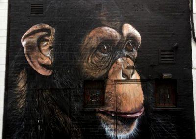 170-camden-street art-street art camden-chimp-graffiti art-spray paint art-wall art-primate